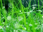 Асортимент газонних трав