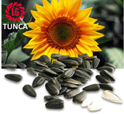 Продам семена подсолнечника Limagrain