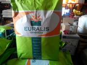 Продам семена подсолнечника Euralis
